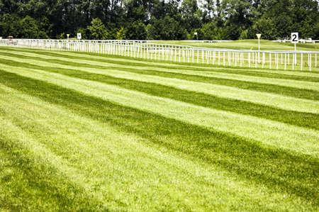 cavallo in corsa: erba su una pista ippica - bello sfondo con spazio per il testo