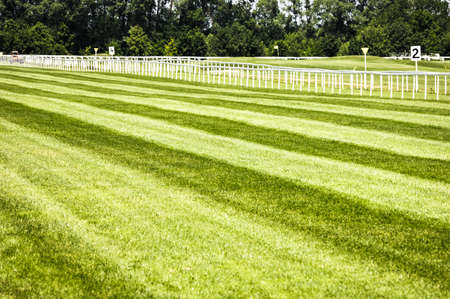 racing track: grass at a horseracing track - nice background with space for text