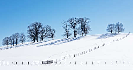 trees at a field in winter photo