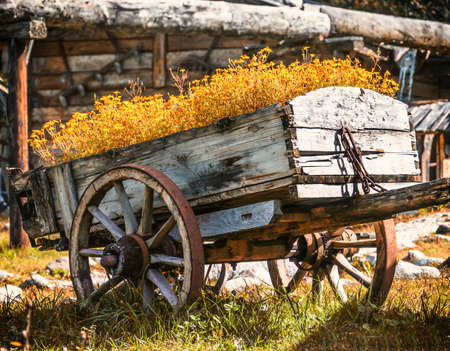 flowers in an old cart photo