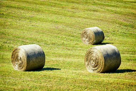 hay bales at a field photo