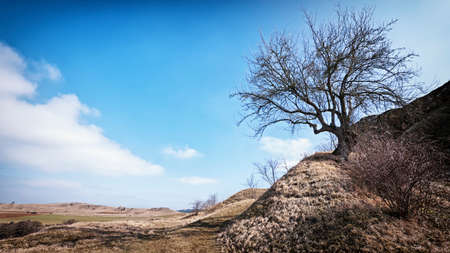 one tree at a dry hill photo