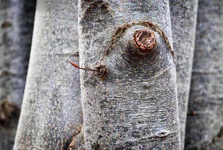 knothole: closeup of a tree trunk - bark