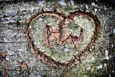 wooden heart at a tree trunk photo