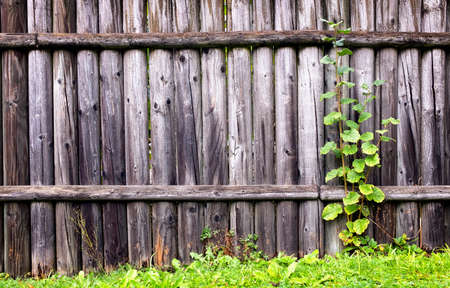 leaves at an old wooden fence photo