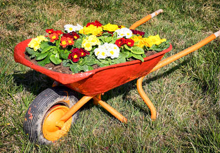 flowers in an old cart at a meadow photo