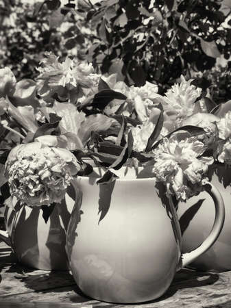potted flowers at a backyard - peony - paeonia photo