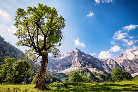 trees photography: karwendel mountains in austria - european alps