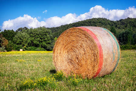 haybale at a field  photo