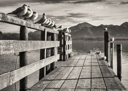 black and white photography: old wooden jetty at the chiemsee lake in bavaria