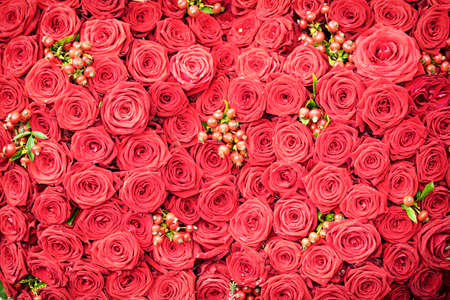 bunch of: beautiful red roses - full frame Stock Photo