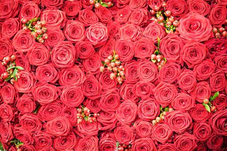 beautiful red roses - full frame Archivio Fotografico
