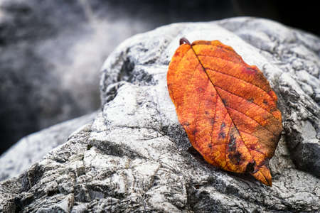 riverbed: leaf and rock at a riverbed Stock Photo