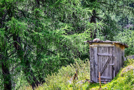 outhouse: old wooden outhouse at a forest