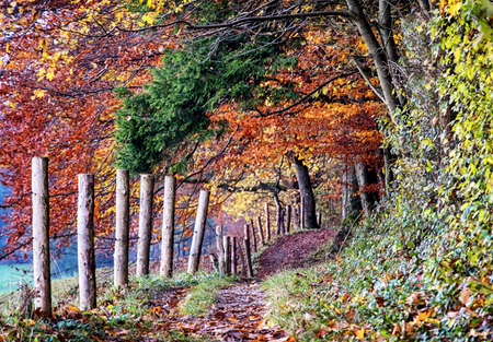 trees photography: footpath at a forest - photo