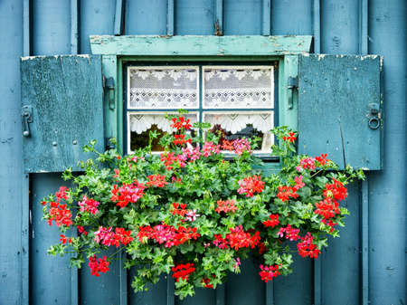 red flower: old window and flowers at a historic building