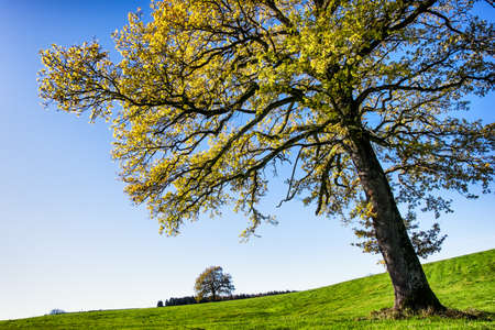 trees photography: tree at a meadow - autumn Stock Photo