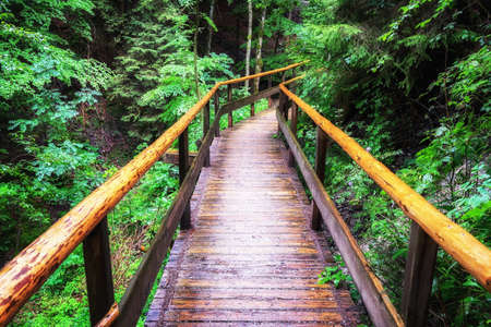 Footbridge: wooden footbridge at a forest