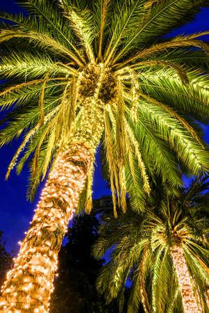 illuminated: illuminated palms at a street