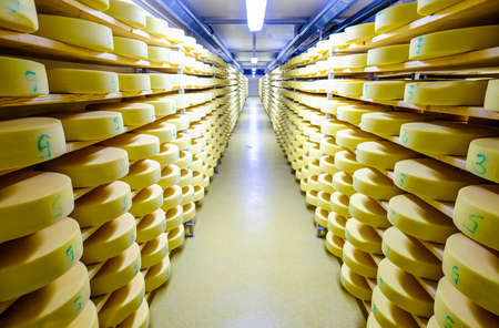 shelves with cheese at a cheese dairy