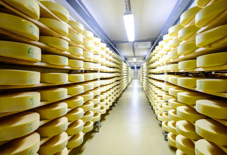 creamery: shelves with cheese at a cheese dairy