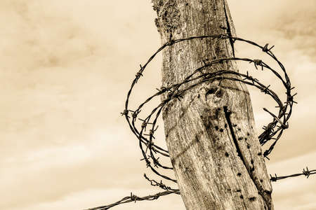 barbed wire at an old fence