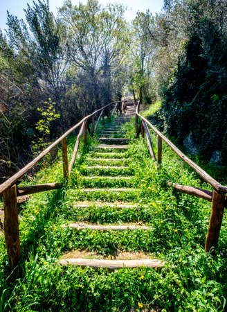 steps at a footpath in a forest