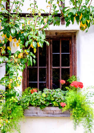 cranesbill: old window and flowers - photo