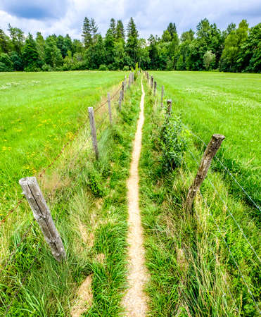 small footpath at a meadow