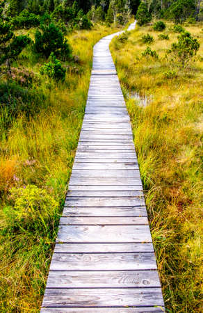 wooden footpath at a meadow