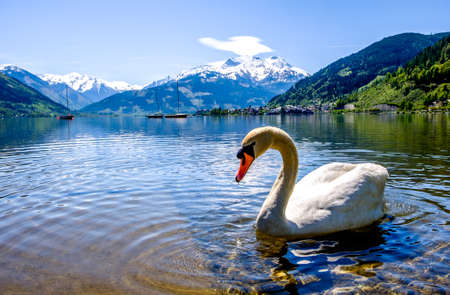 zeller see (zeller lake) in austria Stock Photo