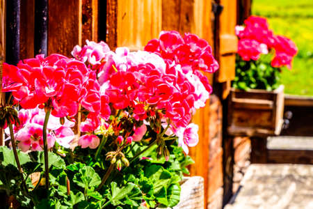 flowers at an old window - closeup