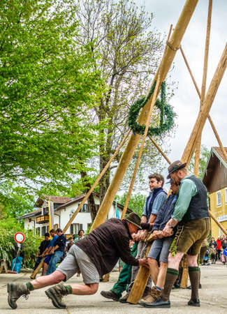 BAD TOELZ, GERMANY - MAY 1: A traditional maypole is being set up by the local bavarians during the typical May Day festival on May 1, 2018 in Bad Toelz in Germany.