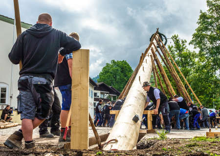 BENEDIKTBEUERN, GERMANY - MAY 1: A traditional maypole is being set up by the local bavarians during the typical May Day festival on May 1, 2018 in Benedikteuern in Germany. Editorial