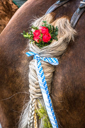 decorated pigtail at a horse