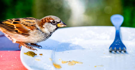 nice sparrow on a dish - photo Фото со стока - 114922883