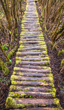 old footpath at a forest Banco de Imagens