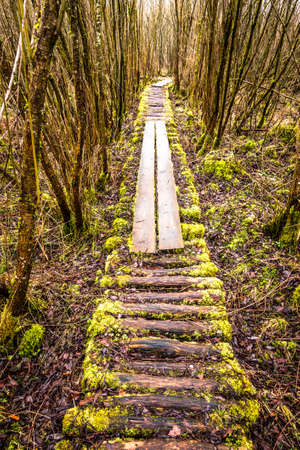 old footpath at a forest 免版税图像
