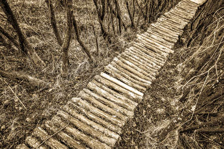 old footpath at a forest Foto de archivo
