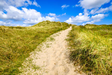 sand dune at the northsea - sylt