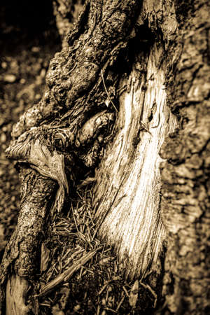 roots of an old tree - photo