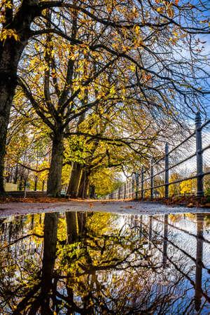 trees at a promenade - nice reflection