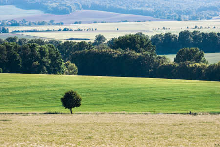 suburbia: Lonely Tree in Landscape Stock Photo