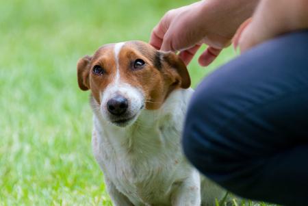 glance: Appeased Glance of Beagle