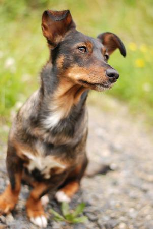 waiting glance: Staring Dog on Way