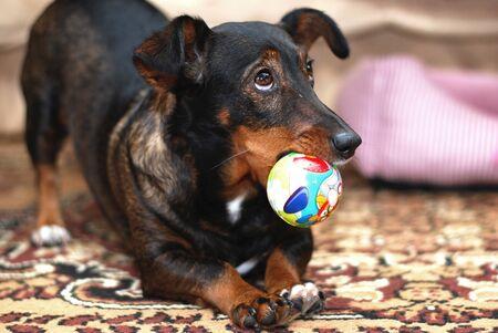 waiting glance: Dog Plays