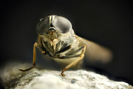 Stacked Photography of Fly, details of Eyes