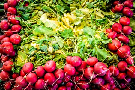 Freshly harvested, purple colorful radish Reklamní fotografie