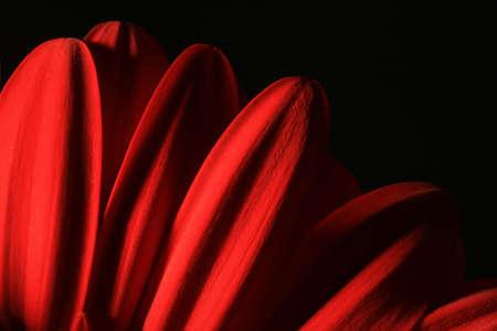 Gerbera flower close-up Banque d'images - 2946087