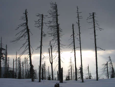 barren: Died out forest Stock Photo